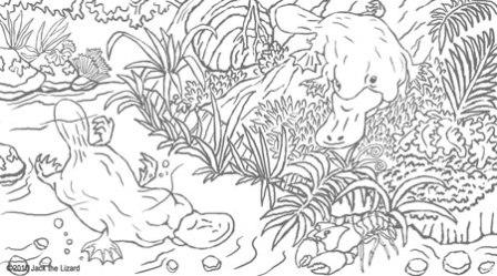 dibujo de ornitorrinco para colorear