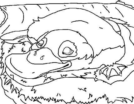 ornitorrinco durmiendo para dibujar